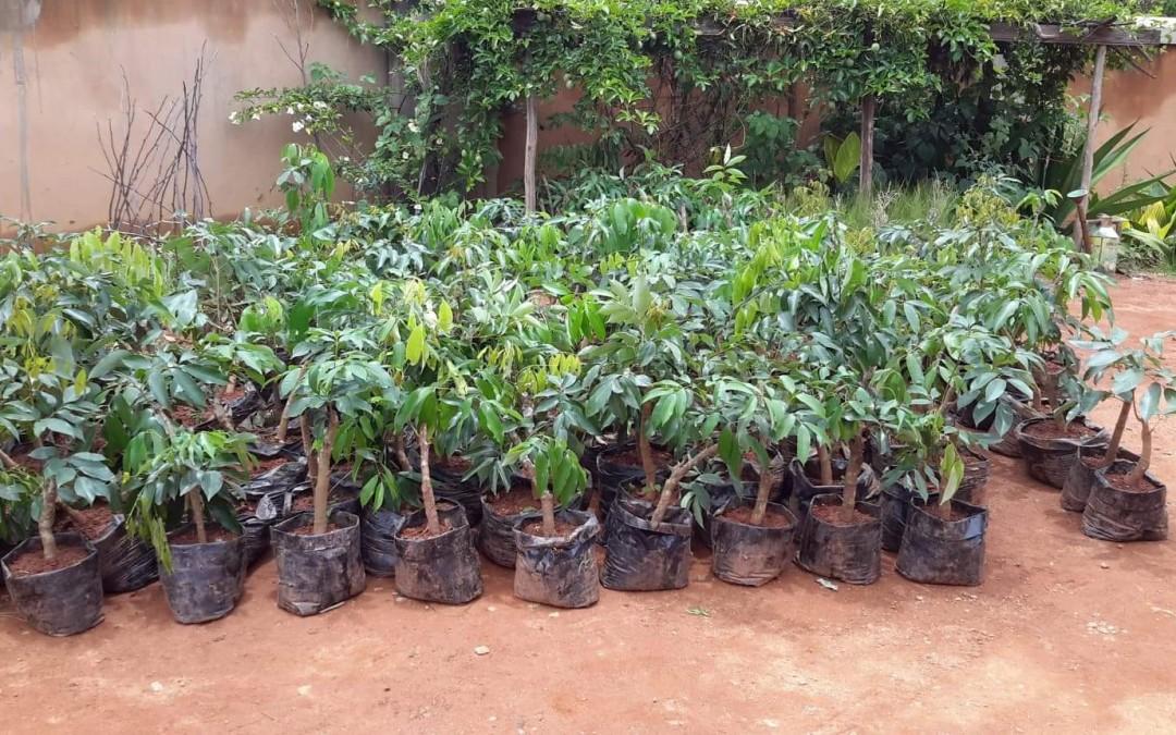 450 plants de Litchis distribués dans les écoles du programme VAHATRA